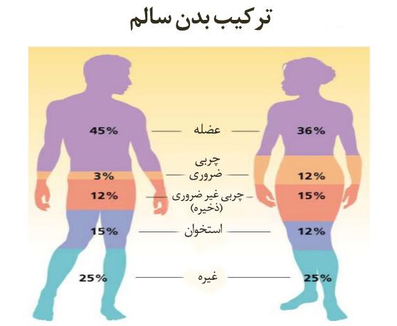 آنالیز بدن یا ارزیابی ترکیب بدن سالم